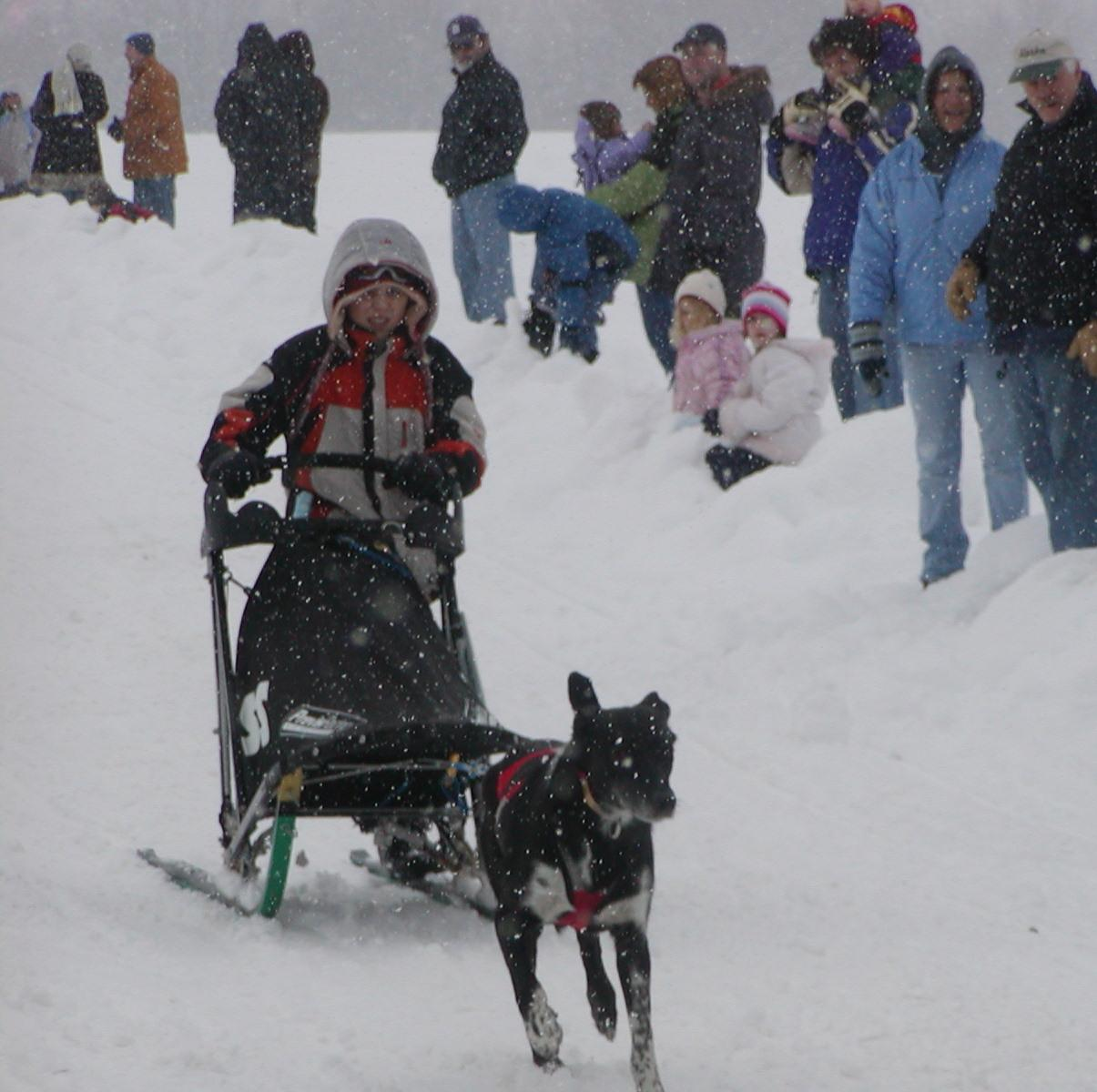 Laconia NH world Sled Dog Derby