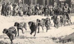 Dog Sled Historical 1