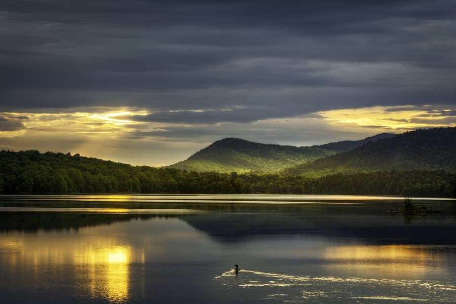 Sunrise over distant mountains reflected in glassy lake with a single loon swimming