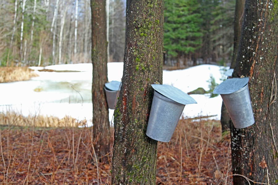 New Hampshire Maple Weekend